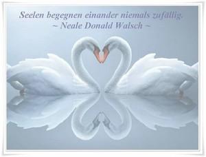 Engel Licht Und Feenzauber Sprüche Weisheiten